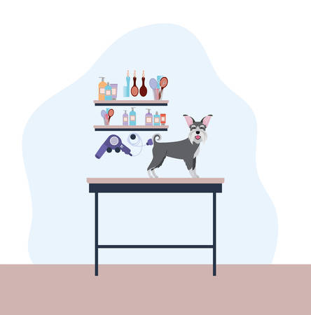 cute schnauzer dog care salon scene vector illustration design