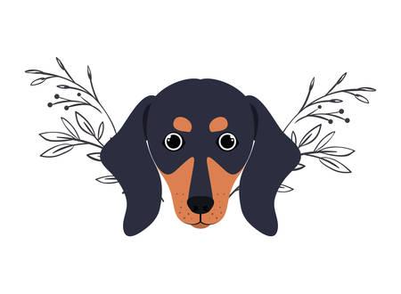 head of cute dachshund dog on white background vector illustration design