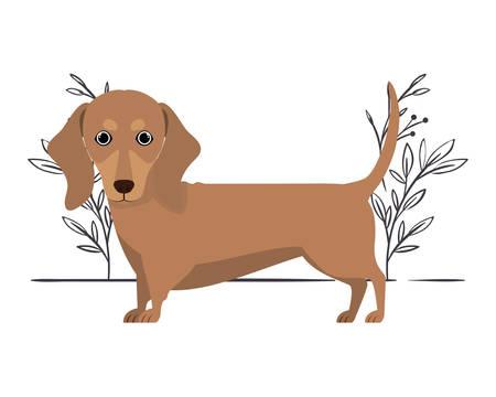 cute dachshund dog on white background vector illustration design Archivio Fotografico - 129040341