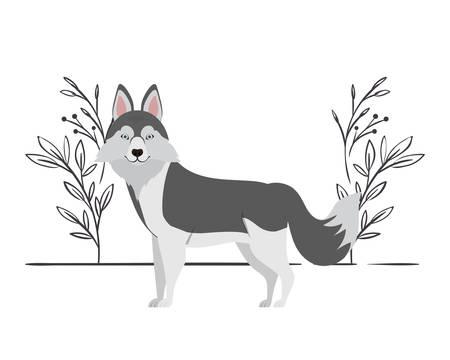 cute lobo siberiano dog on white background vector illustration design Archivio Fotografico - 129041643