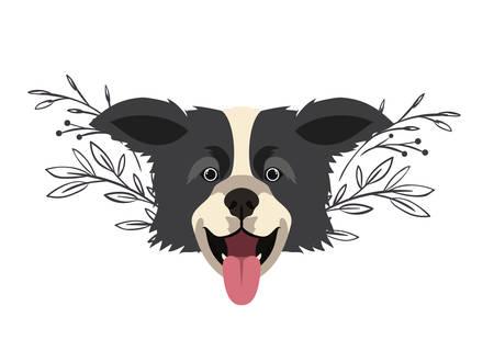 head of cute border collie dog on white background vector illustration design
