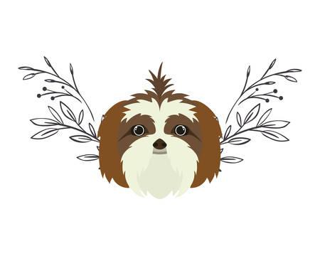 head of cute shih tzu dog on white background vector illustration design