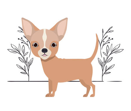 cute chihuahua dog on white background vector illustration design