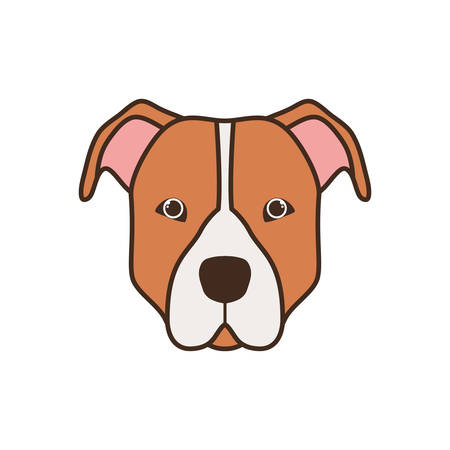 cute pitbull dog on white background vector illustration design