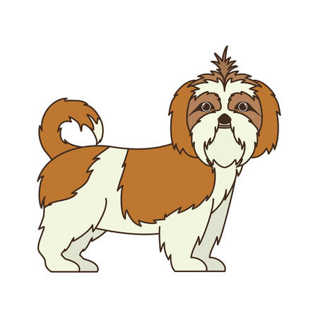 cute shih tzu dog on white background vector illustration design Vector Illustration