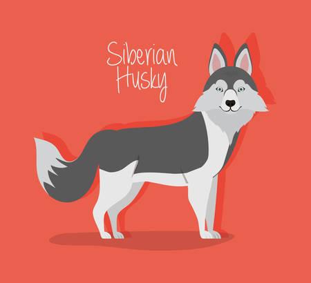 cute siberian huski dog pet character vector illustration design Иллюстрация