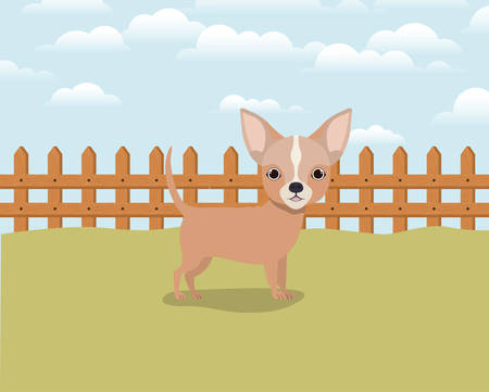cute chihuahua dog pet in the camp vector illustration design 일러스트