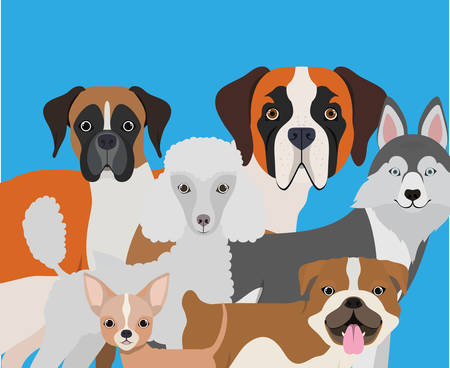 group of dogs pets characters vector illustration design