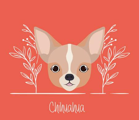 cute chihuahua dog pet head character vector illustration design 일러스트
