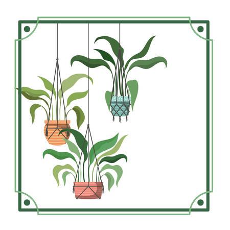 frame with houseplants on macrame hangers vector illustration design