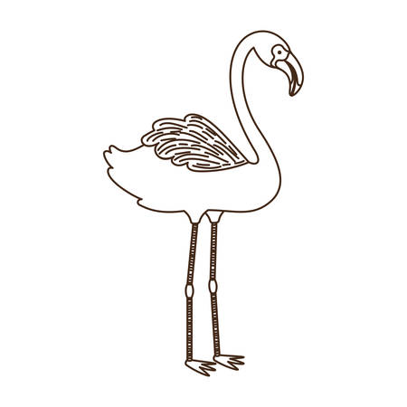 pink flamingo in white background vector illustration design