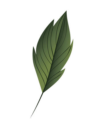branch with leaf isolated icon vector illustration design