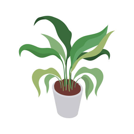 houseplant with potted on white background vector illustration design Иллюстрация