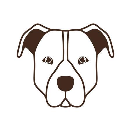cute pitbull dog on white background vector illustration design