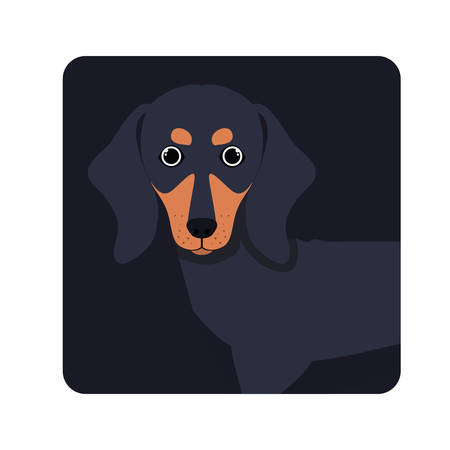 cute dachshund dog on white background vector illustration design