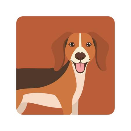 cute beagle dog on white background vector illustration design