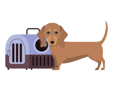 dog and pet transport box on white background vector illustration design
