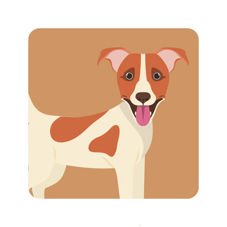 cute jack russell terrier dog on white background vector illustration design Stock Illustratie
