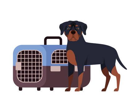 dog and pet transport box on white background vector illustration design