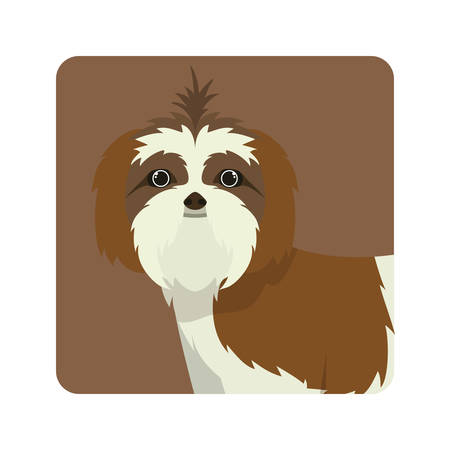 cute shih tzu dog on white background vector illustration design