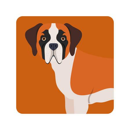 cute saint bernard dog on white background vector illustration design