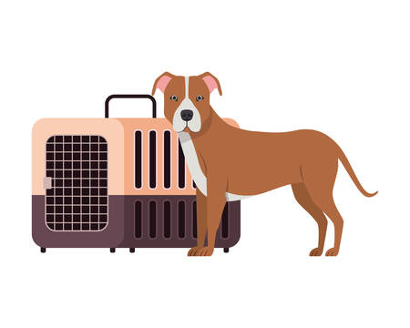 dog and pet transport box on white background vector illustration design 스톡 콘텐츠 - 129831002