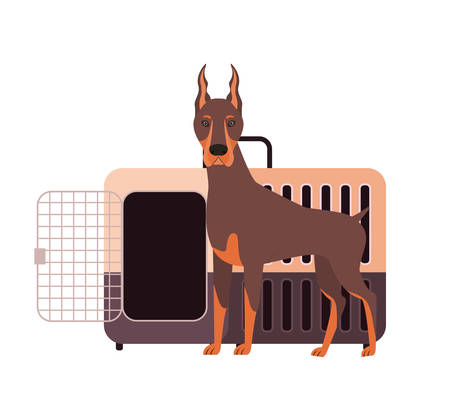 dog and pet transport box on white background vector illustration design 스톡 콘텐츠 - 129831372