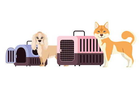 dogs and pet transport boxes on white background vector illustration design