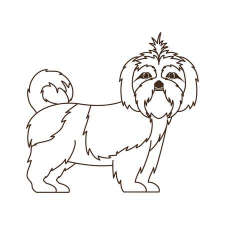 Silhouette de mignon chien shih tzu sur fond blanc vector illustration design Vecteurs