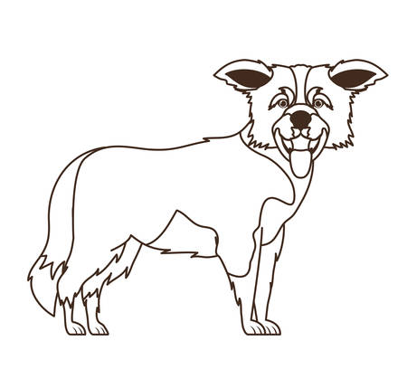 silhouette of cute border collie dog on white background vector illustration design