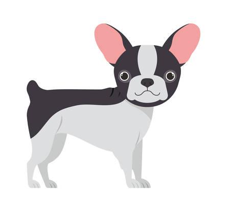 cute boston terrier dog on white background vector illustration design Ilustração