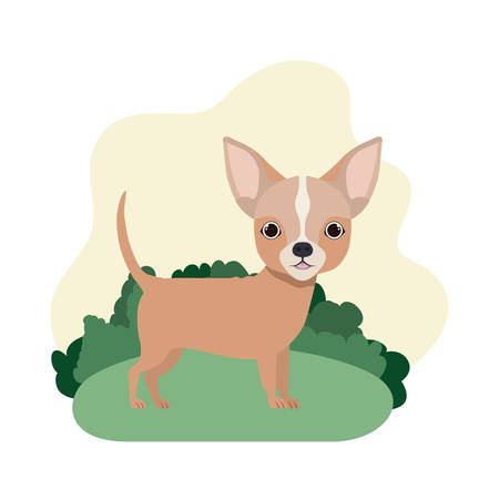 cute chihuahua dog on white background vector illustration design Banque d'images - 129369008