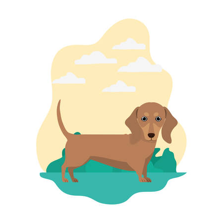 cute dachshund dog on white background vector illustration design Banque d'images - 129373017