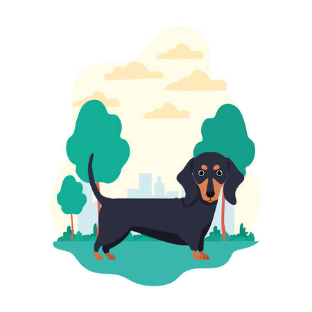 cute dachshund dog on white background vector illustration design Banque d'images - 129373566