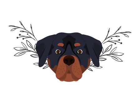 head of cute rottweiler dog on white background vector illustration design Stock Illustratie