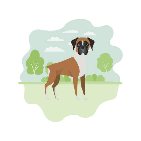 cute boxer dog on white background vector illustration design Banque d'images - 129376446