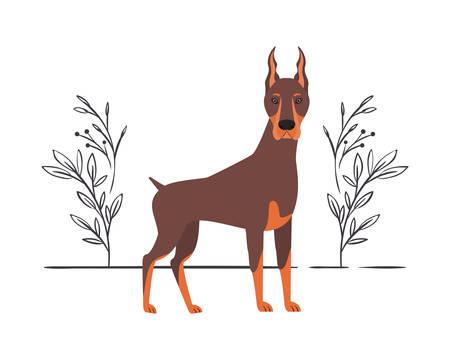 cute doberman dog on white background vector illustration design