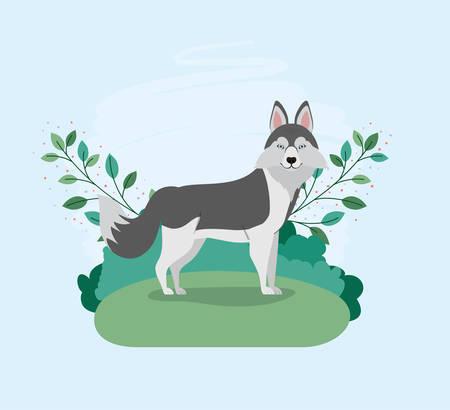 cute siberian husky dog pet in the camp vector illustration design