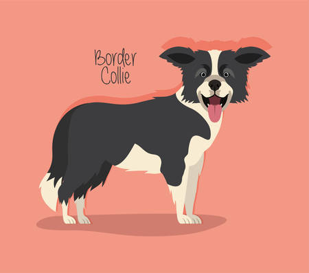 cute border collie dog pet character vector illustration design