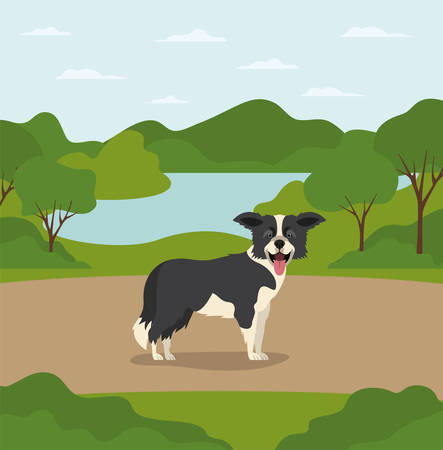 cute border collie dog pet in the camp vector illustration design Stock Illustratie