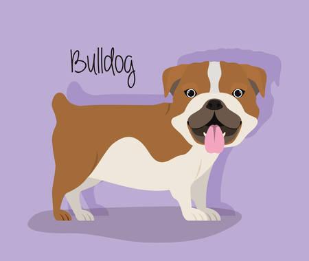 cute bulldog dog pet character vector illustration design Çizim