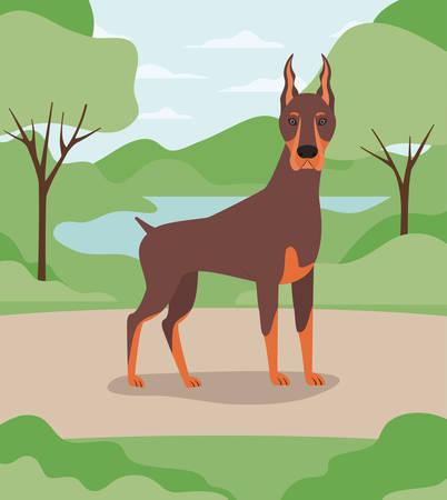 cute doberman dog pet in the camp vector illustration design Banco de Imagens - 129424109