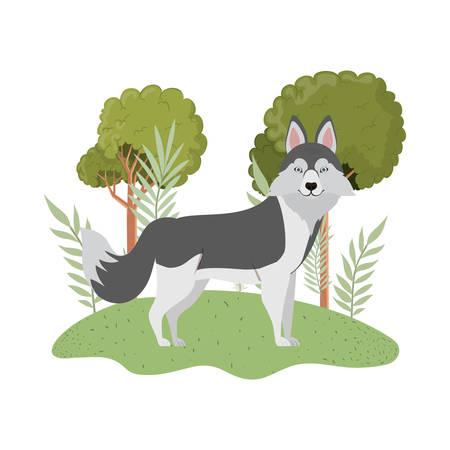 cute lobo siberiano dog on white background vector illustration design