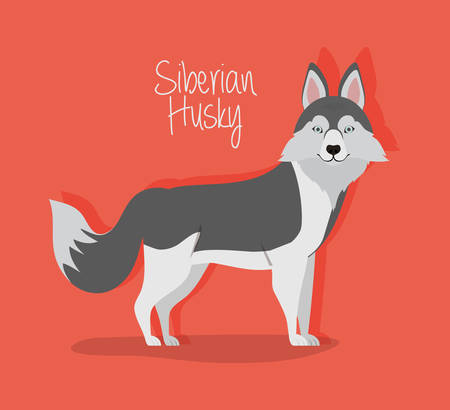 cute siberian huski dog pet character vector illustration design Illustration
