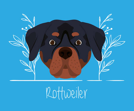 cute rottweiler dog pet head character vector illustration design  イラスト・ベクター素材