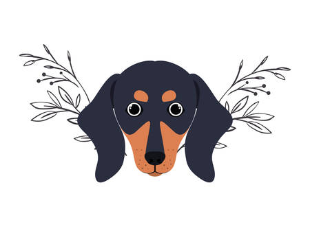 head of cute dachshund dog on white background vector illustration design