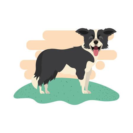 cute border collie dog on white background vector illustration design