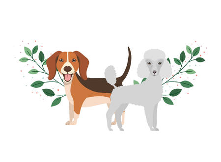cute and adorable dogs on white background vector illustration design Иллюстрация