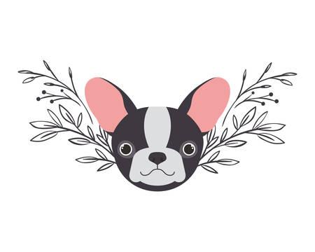 head of cute boston terrier dog on white background vector illustration design