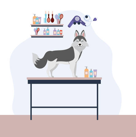 cute siberian huski dog care salon scene vector illustration design Stock Vector - 129724611